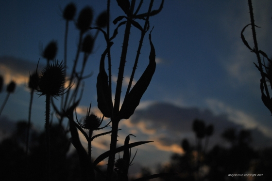 prickly sunset.