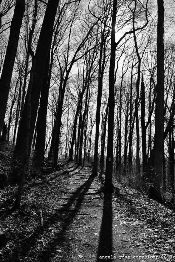 Nasvhille, TN trees